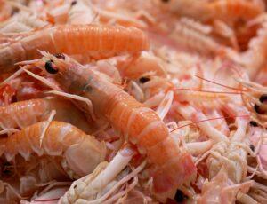 Shrimp Scampi Seafood - Free photo on Pixabay